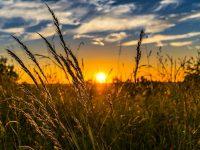 «Стоимость будет расти». Министр аграрной политики призвал украинцев не спешить с продажей земли