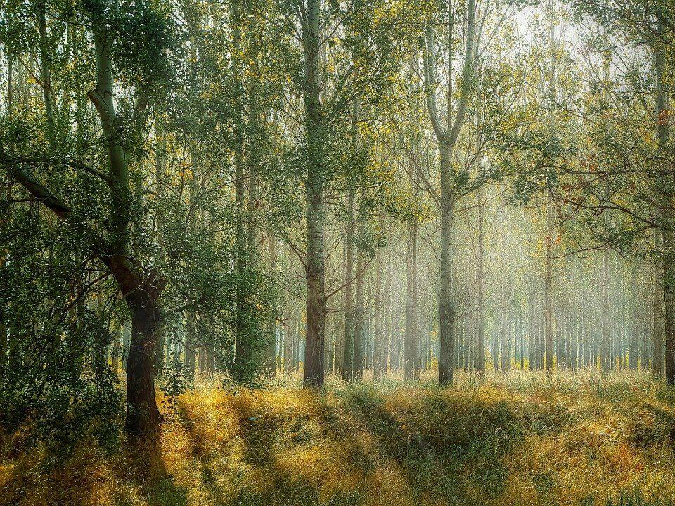 «Касается каждого». В Гослесагентстве Украины оценили инициативу посадить 1 млрд деревьев за три года