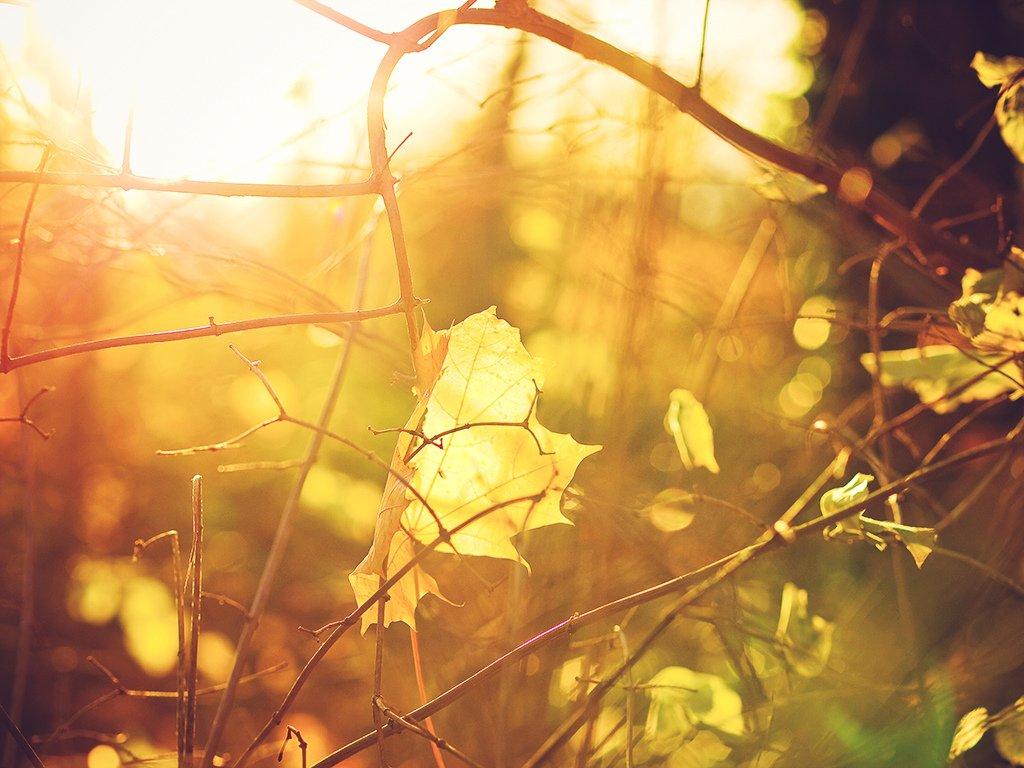 Погода в Украине 28 октября: тепло и солнечно