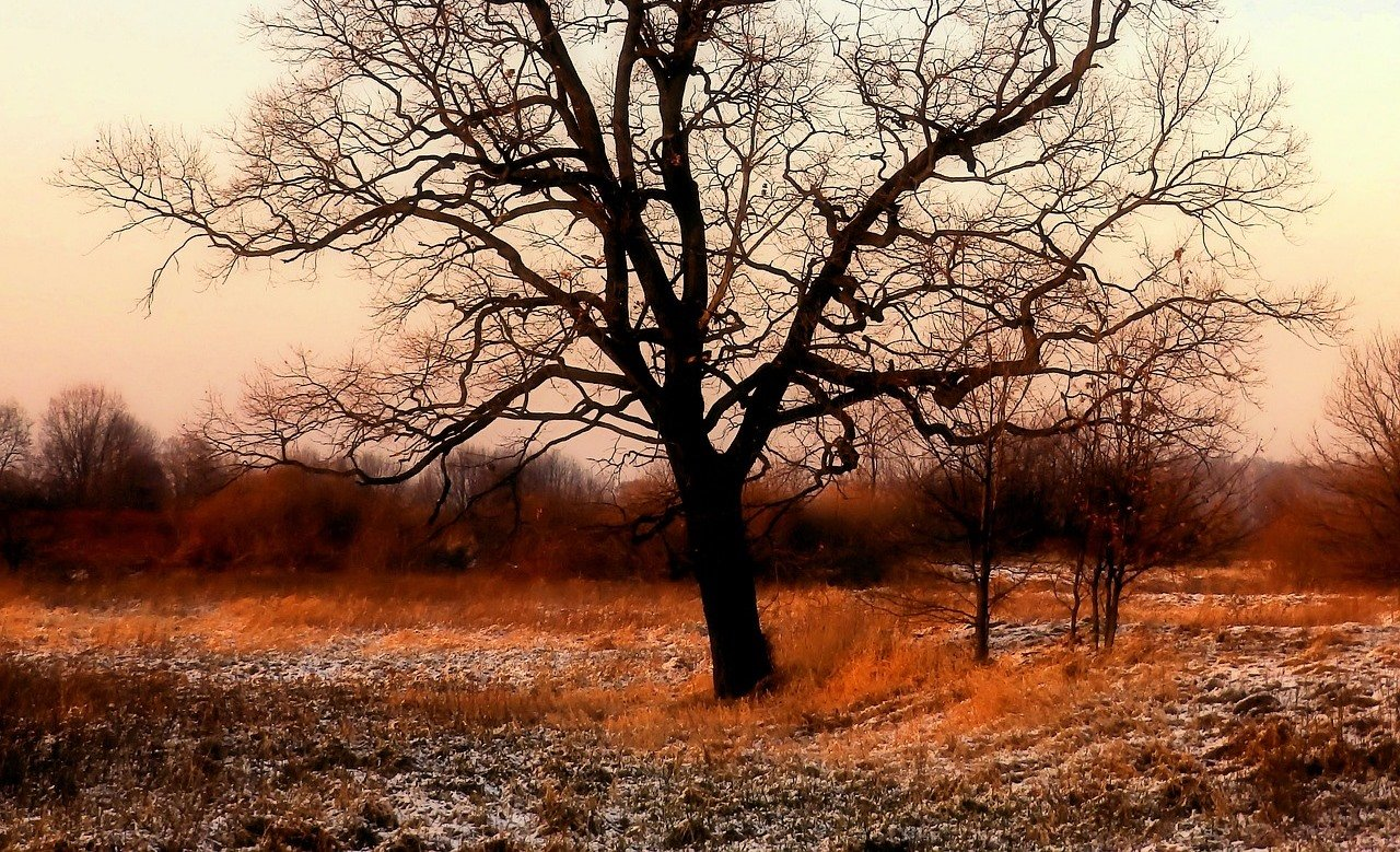 Холод и дожди: когда в Украине окончательно испортится погода